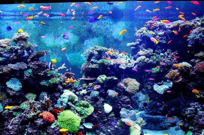 The Paris Aquarium - even better at night!